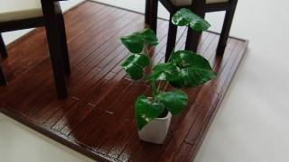 観葉植物作りました。
