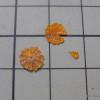 カットオレンジ、試作。