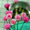 お花増やしてます。