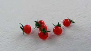 プチトマトです。