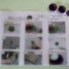 葉物の型セット(キャベツ、レタス、しそ)販売予定。