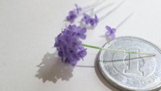 紫陽花、打ち止め!!